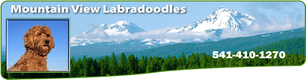 labrodoodleheadercell_03